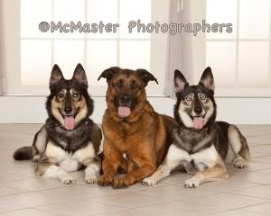 #yeg #yegphotographers #pets #petphotographers #photography #edmontonphotographers